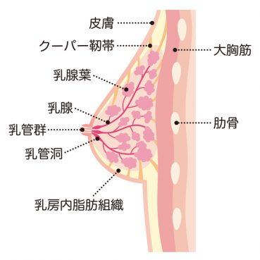 乳腺症-予防_01