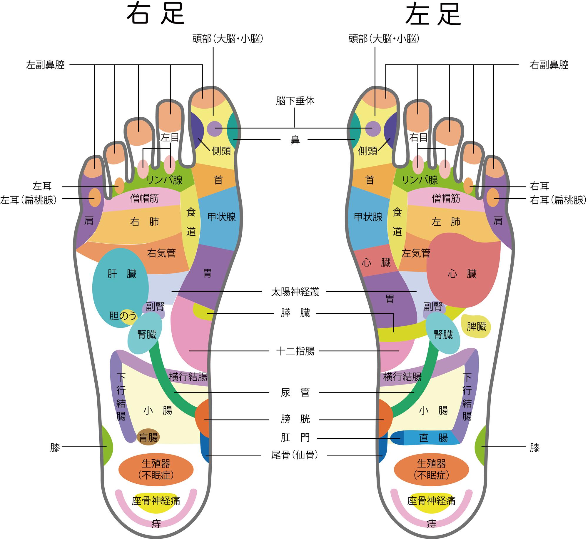 リフレクソロジー(足つぼ)マップ