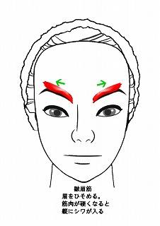 皺眉筋のイラスト