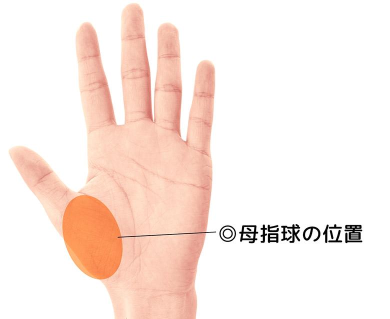 手のひらの母指球の位置